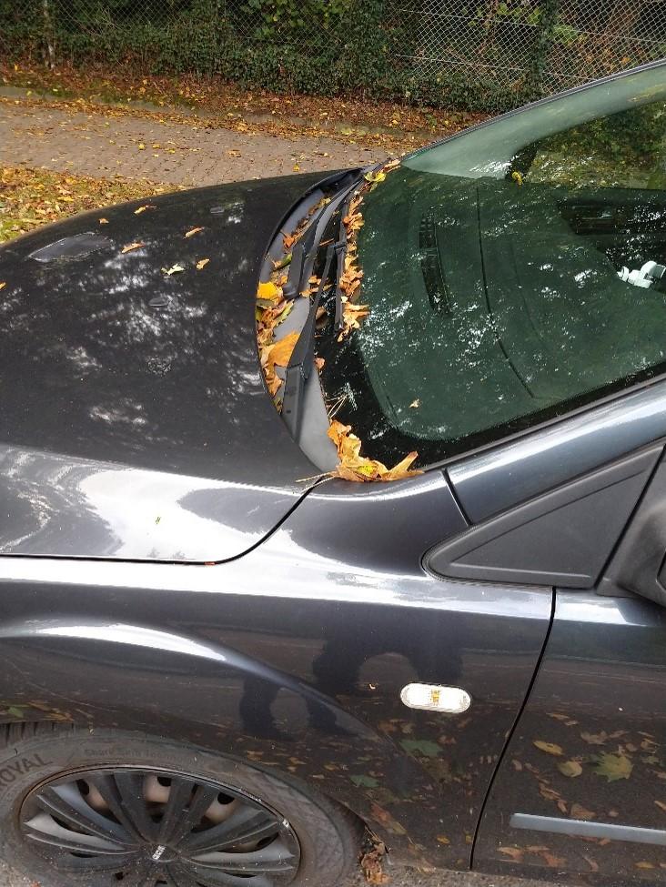 Im Herbst landen immer wieder Blätter auf dem Auto